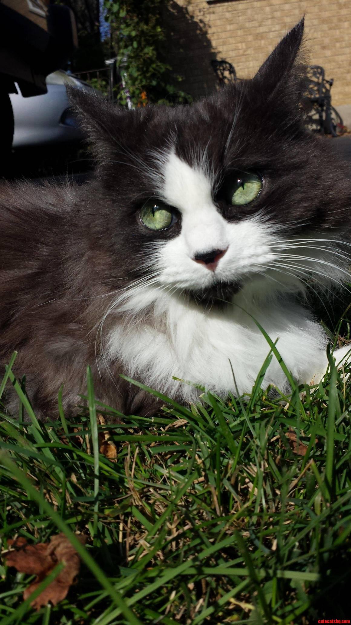 Meet Catastrophe