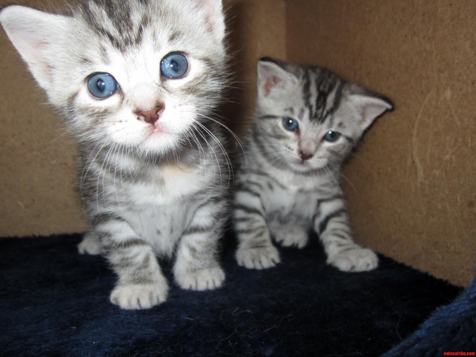My 3week old kittens