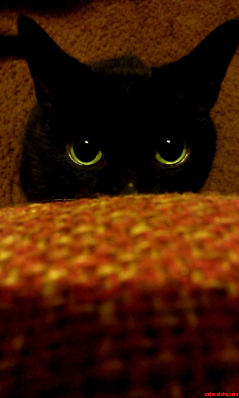 My 9 year old baby kikers getting ready to pounce on the couch cushion
