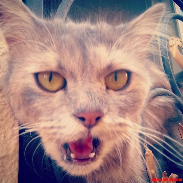 My cat is not very photogenic..