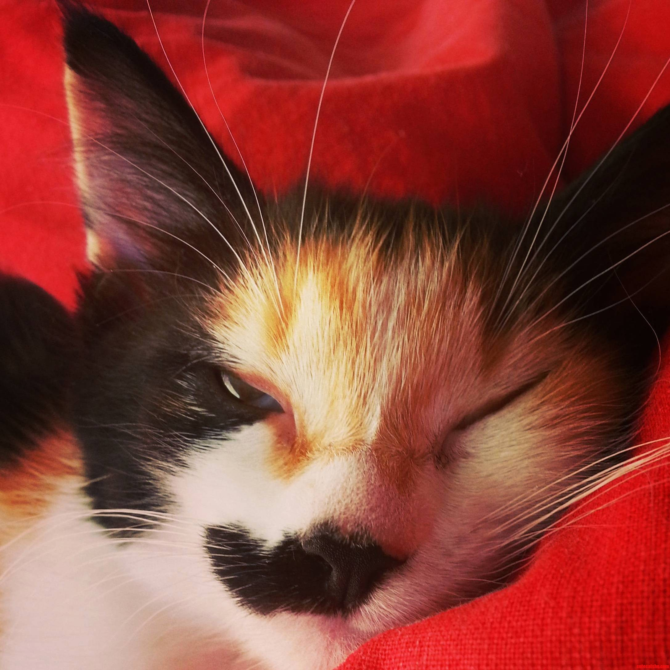 My cat recently passed away and this is my favourite picture of hers from when she was just a kitten