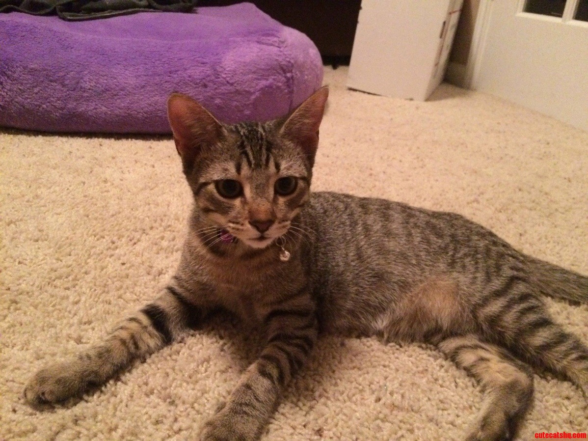 My new baby Navi