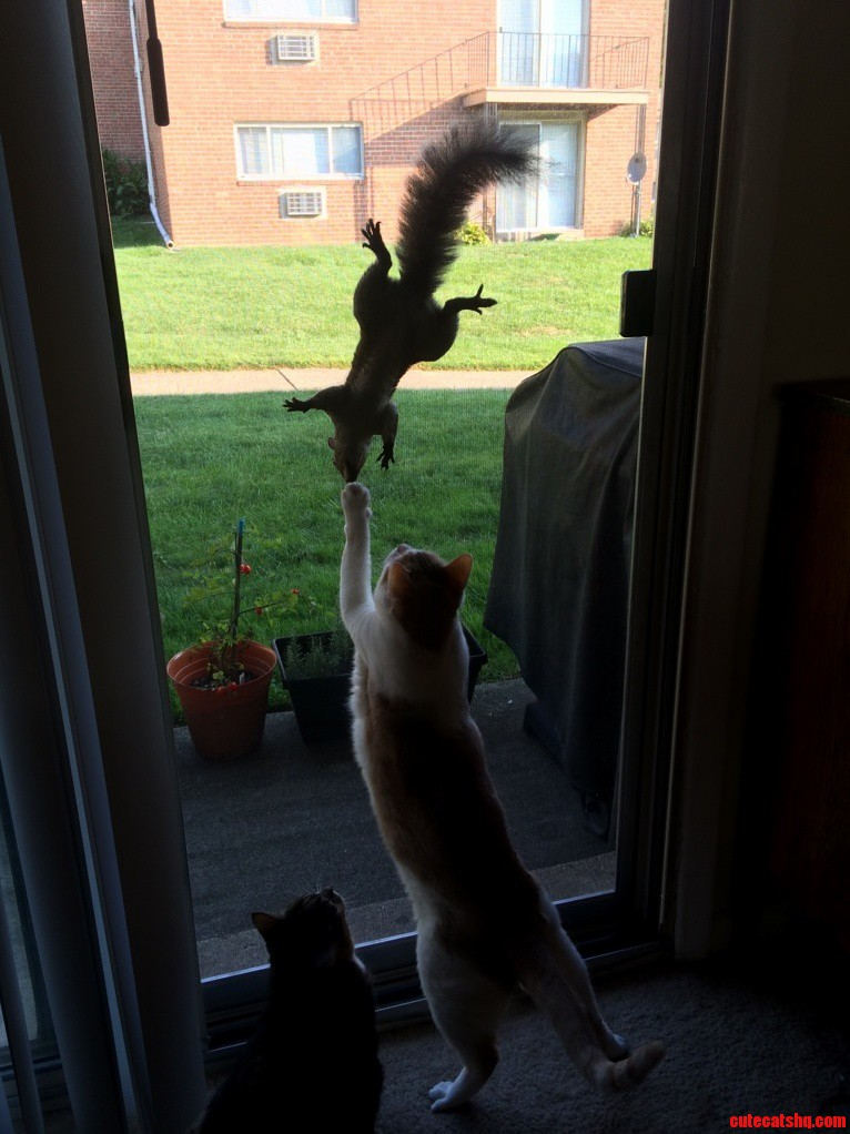 Squirrel messing with cat