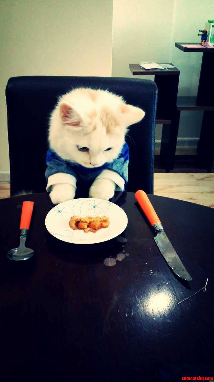 Trevor the table manners cat during dinner