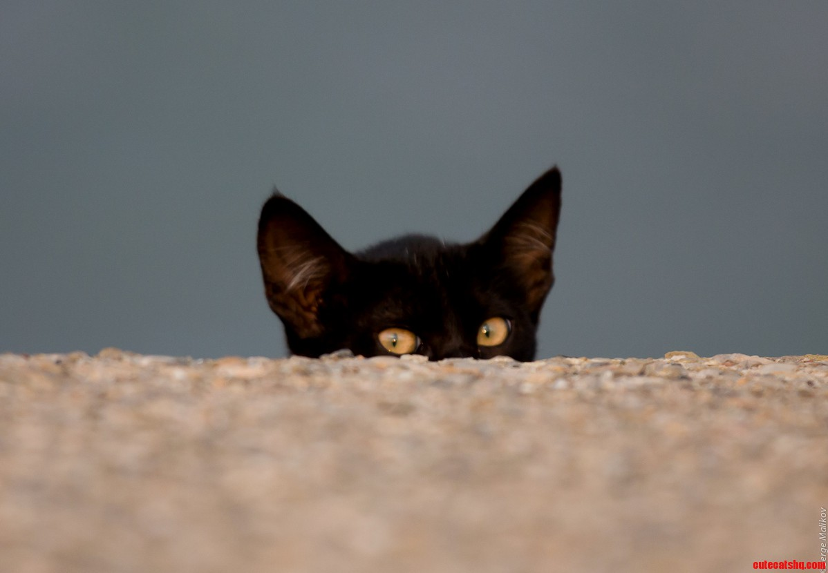 A very curious kitten on the canary islands
