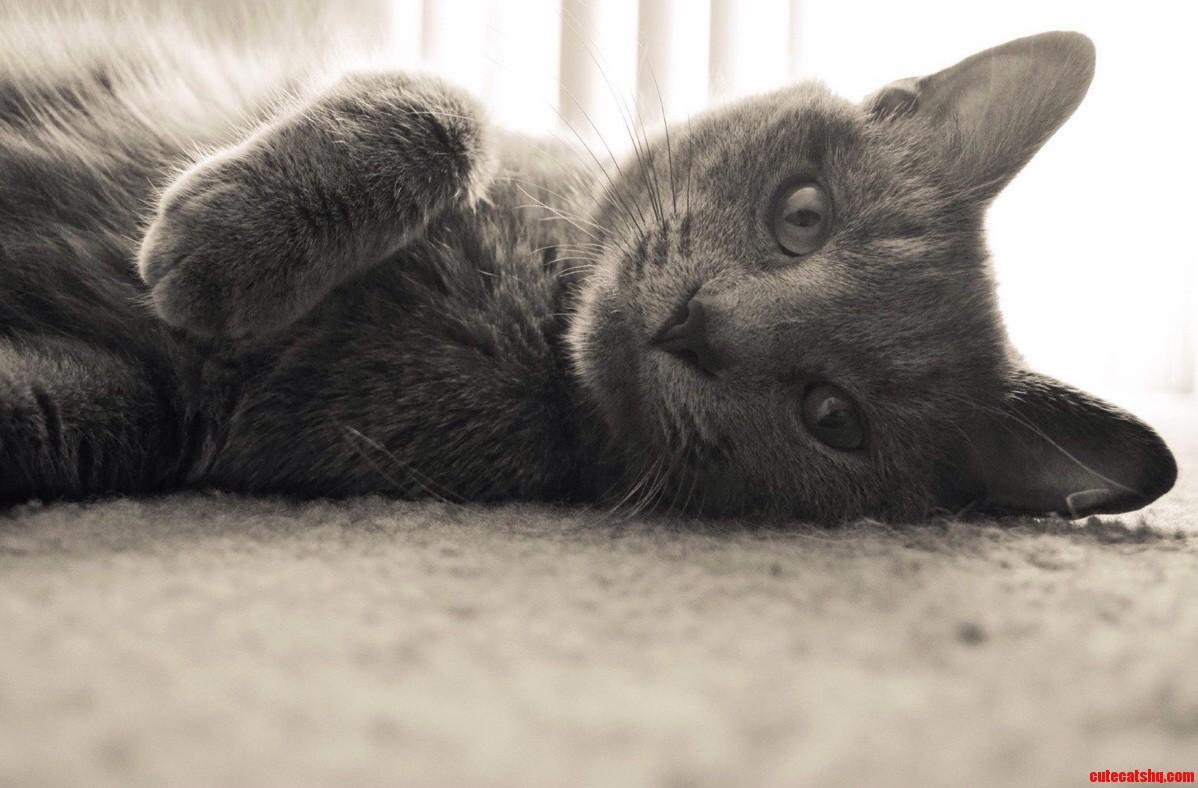 Albus being photogenic.
