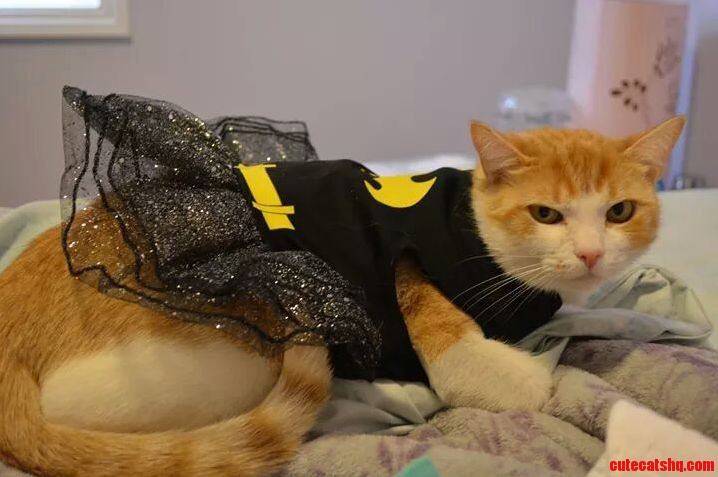 Batkitty bitto is not amused