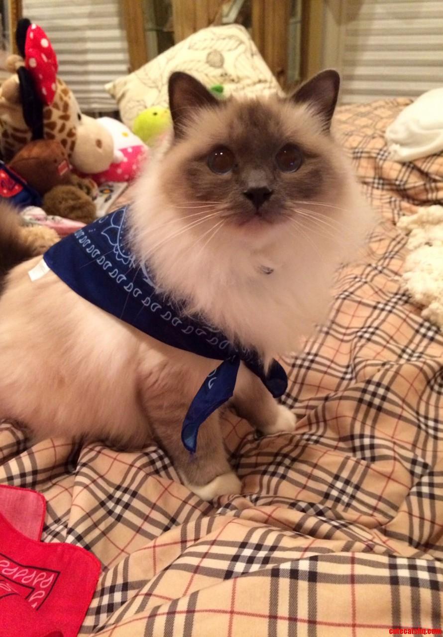 Brinkley in his new blue bandana