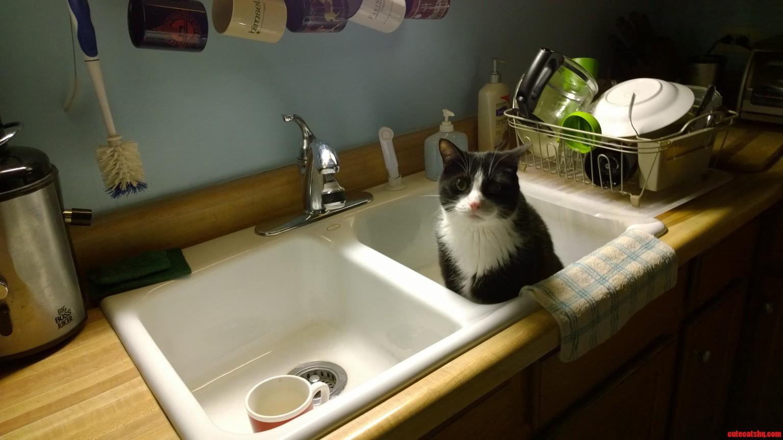 Cat in sink.
