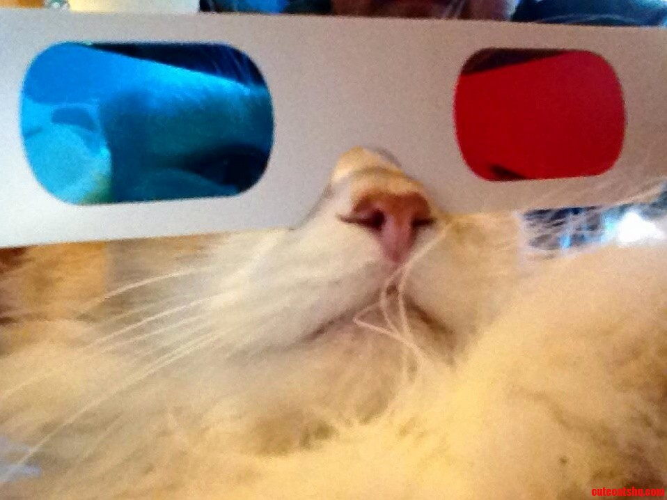 Cats now in 3d