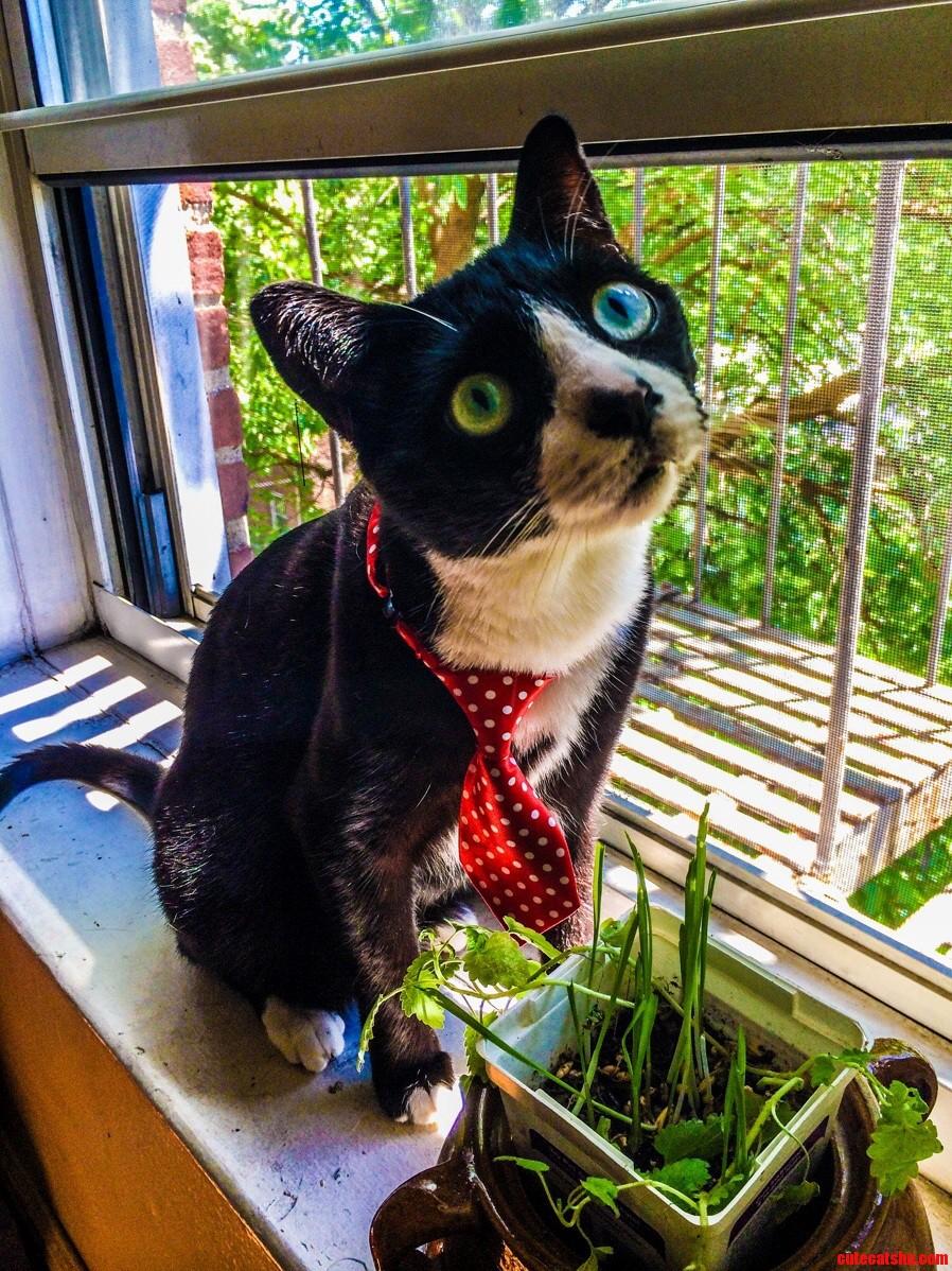 Does a cat wear a necktie