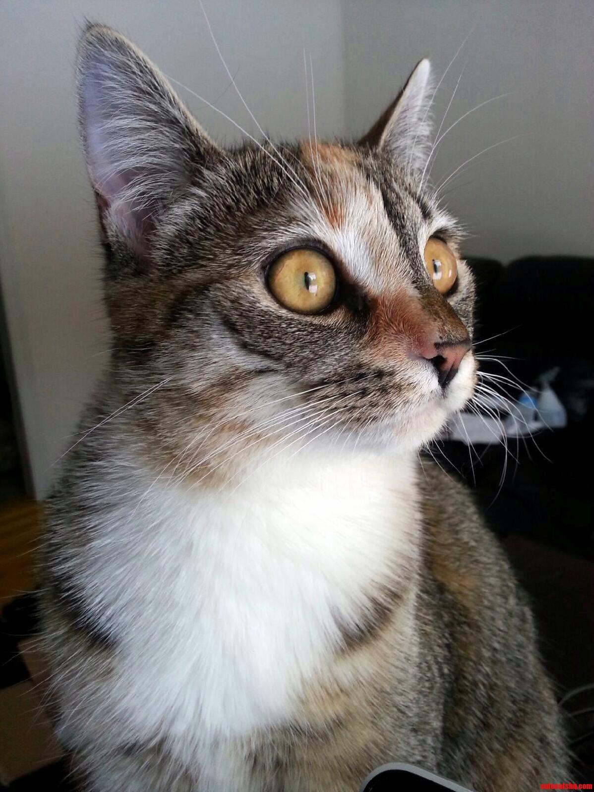 Every time she hears a noise.
