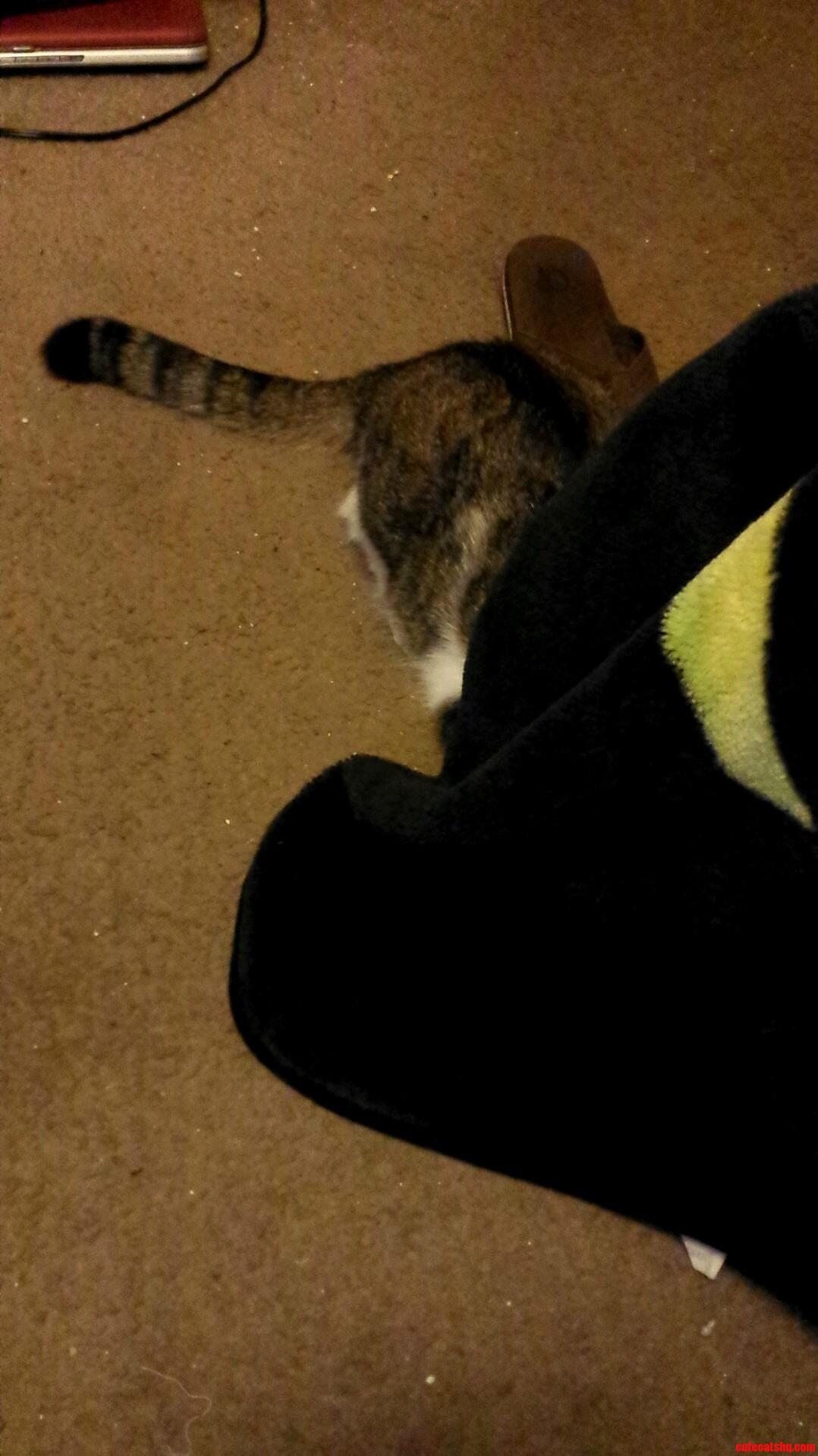 Gizmos hiding spot before he pounces at me and runs away.