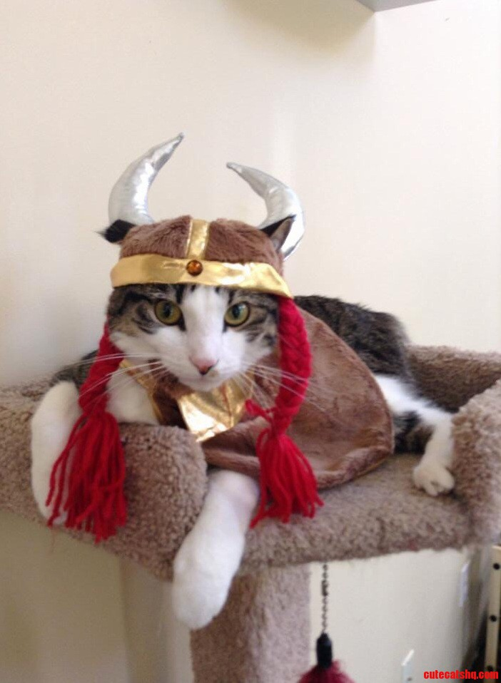 Harvey the Viking warrior will put up with his humans antics for yummy treats