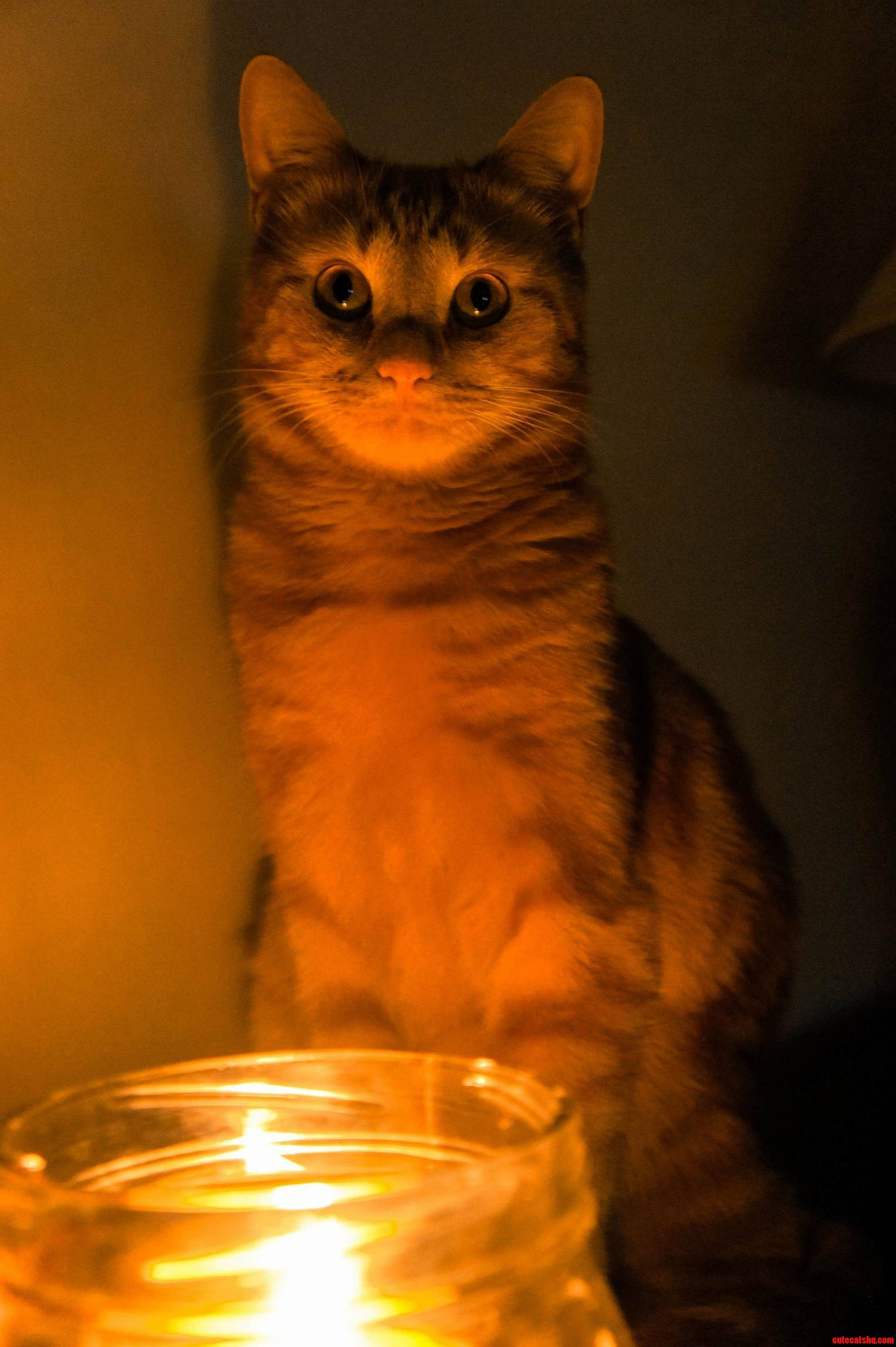 He loves candles even though he has burned his paw and whiskers on one.