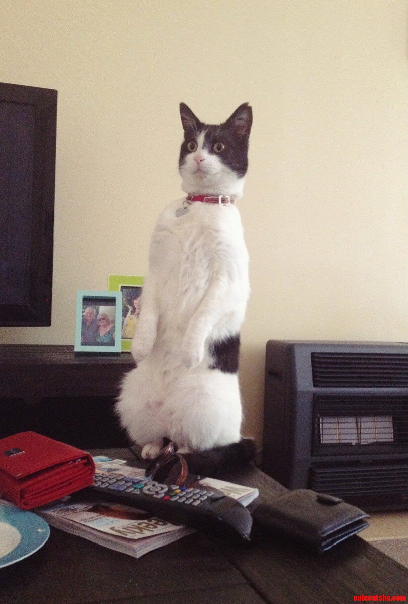 He saw another cat at the window…
