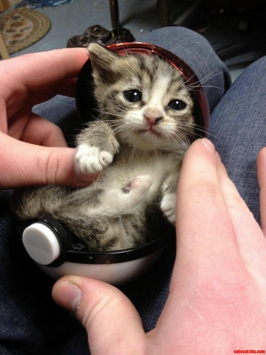 I choose you kitteh
