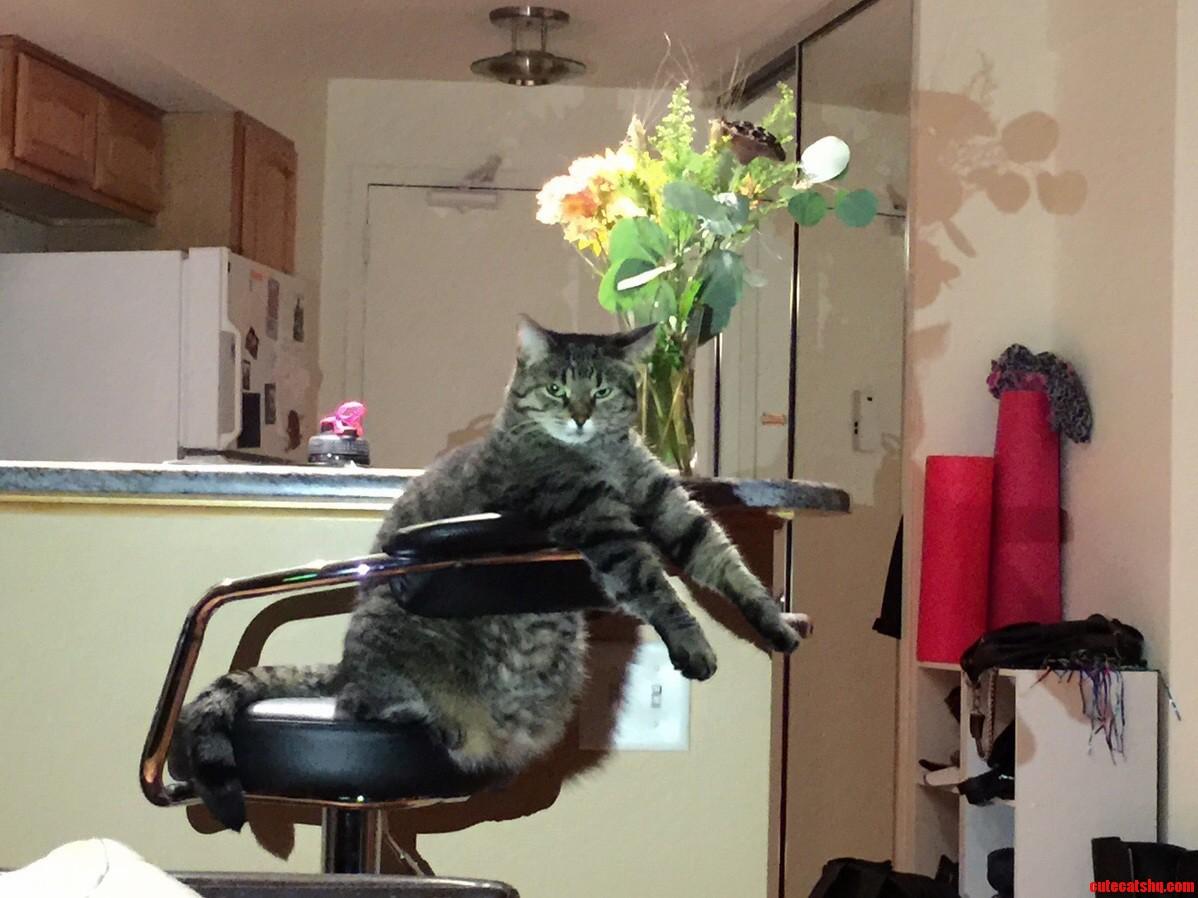 Invisible piano cat