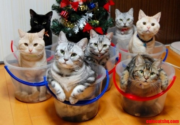 Just barely remembered my cake day so heres a bunch of cats