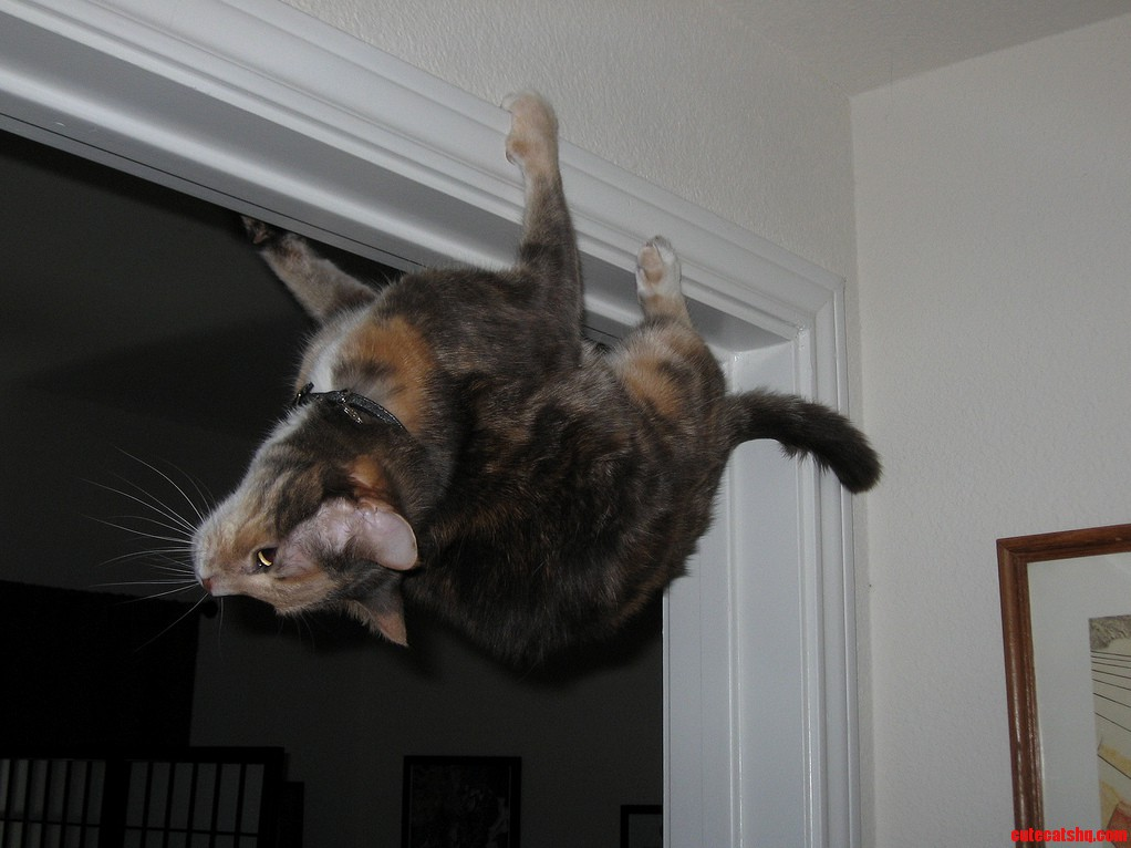Limited edition anti-gravity cat
