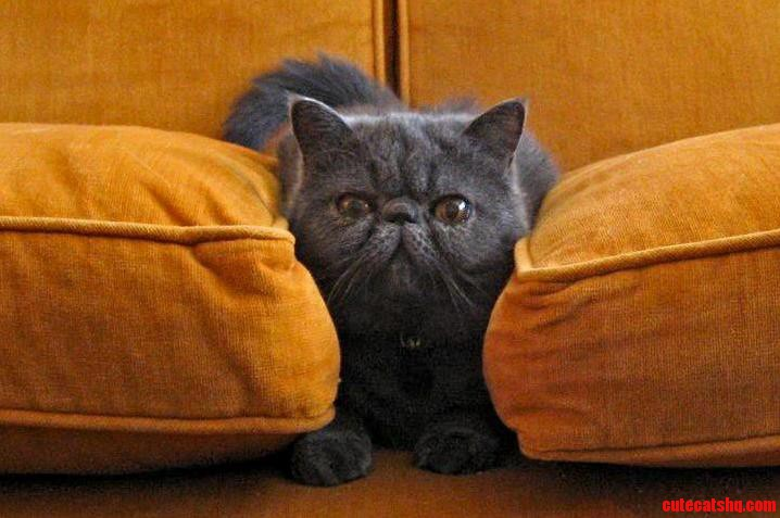 Louis fits between the couch cushions and thinks hes invisible