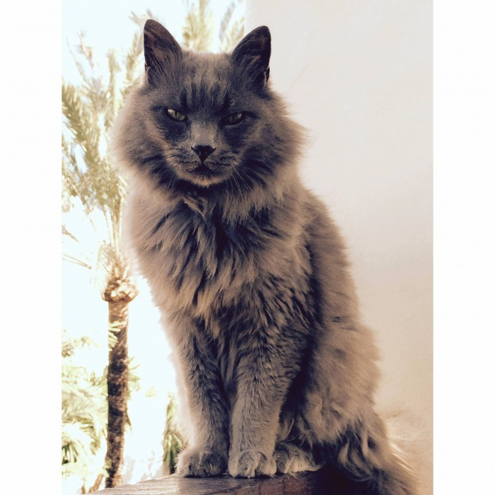 Meet Elvis My Lazy Furry Cat.