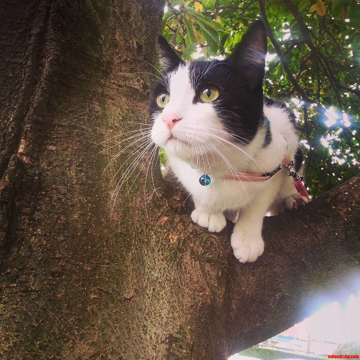 Meet lydia. she likes to climb our tree and watch the birds.