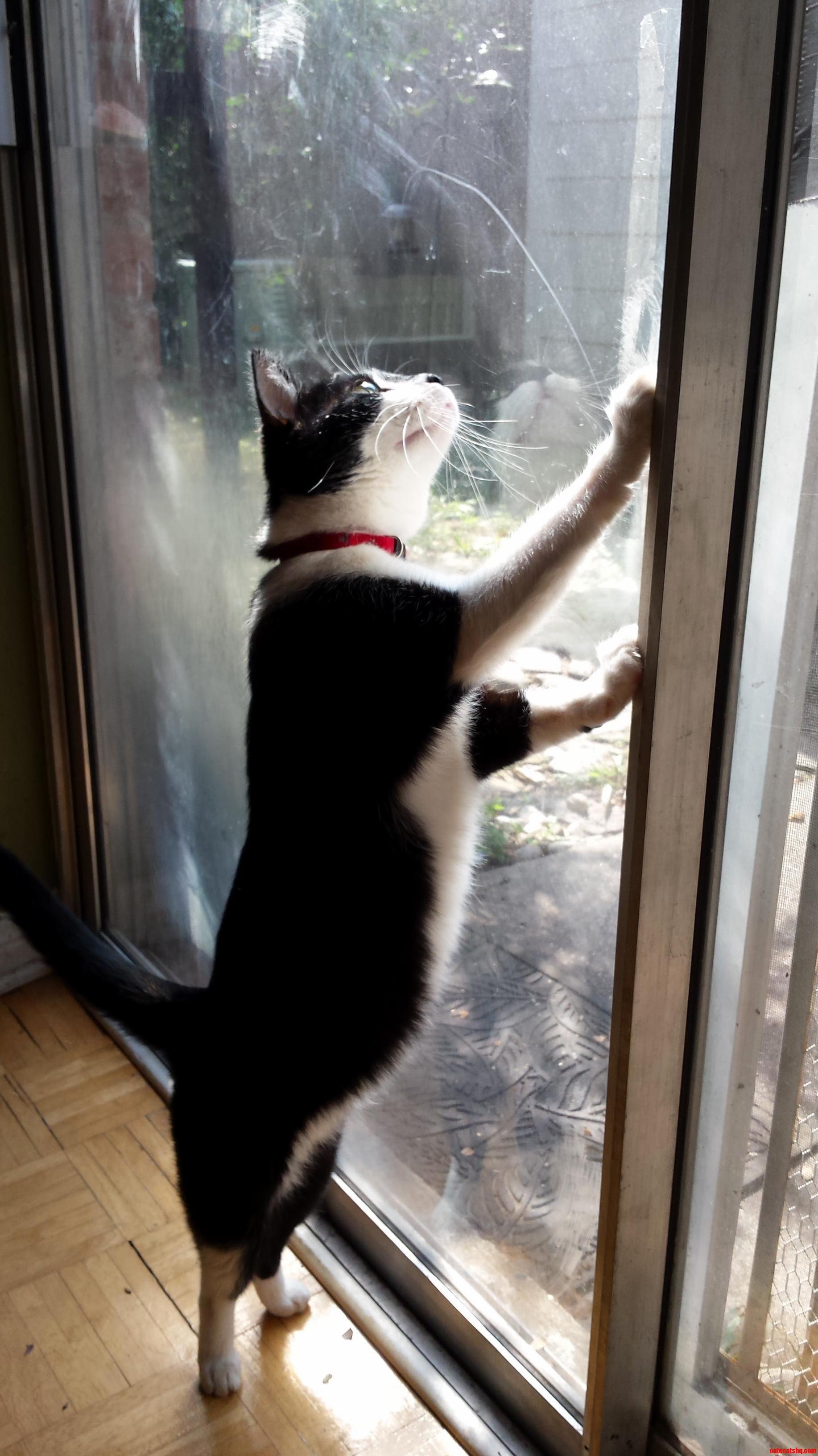 Milo sees a lizard