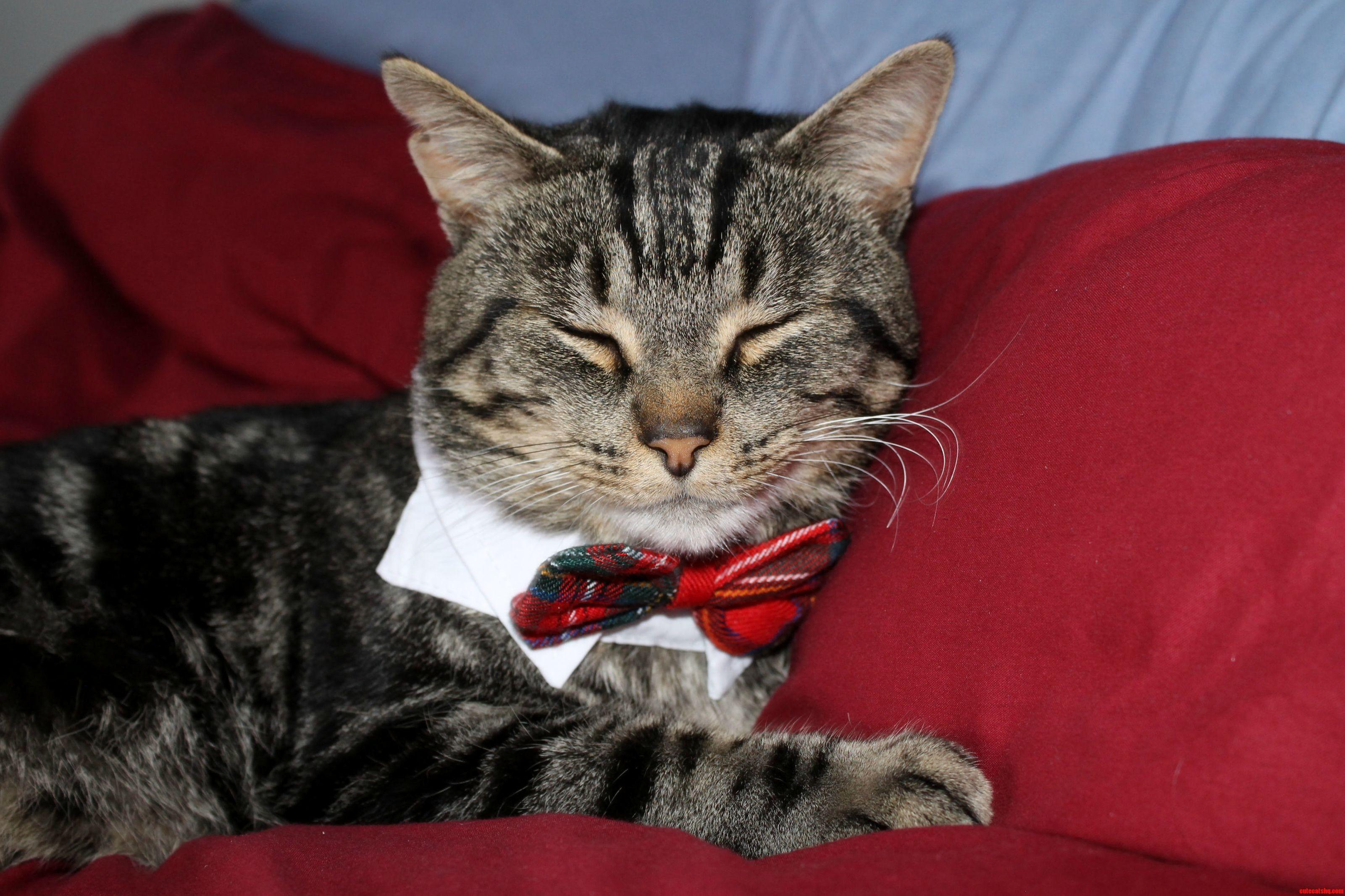 Murphy likes his bow ties