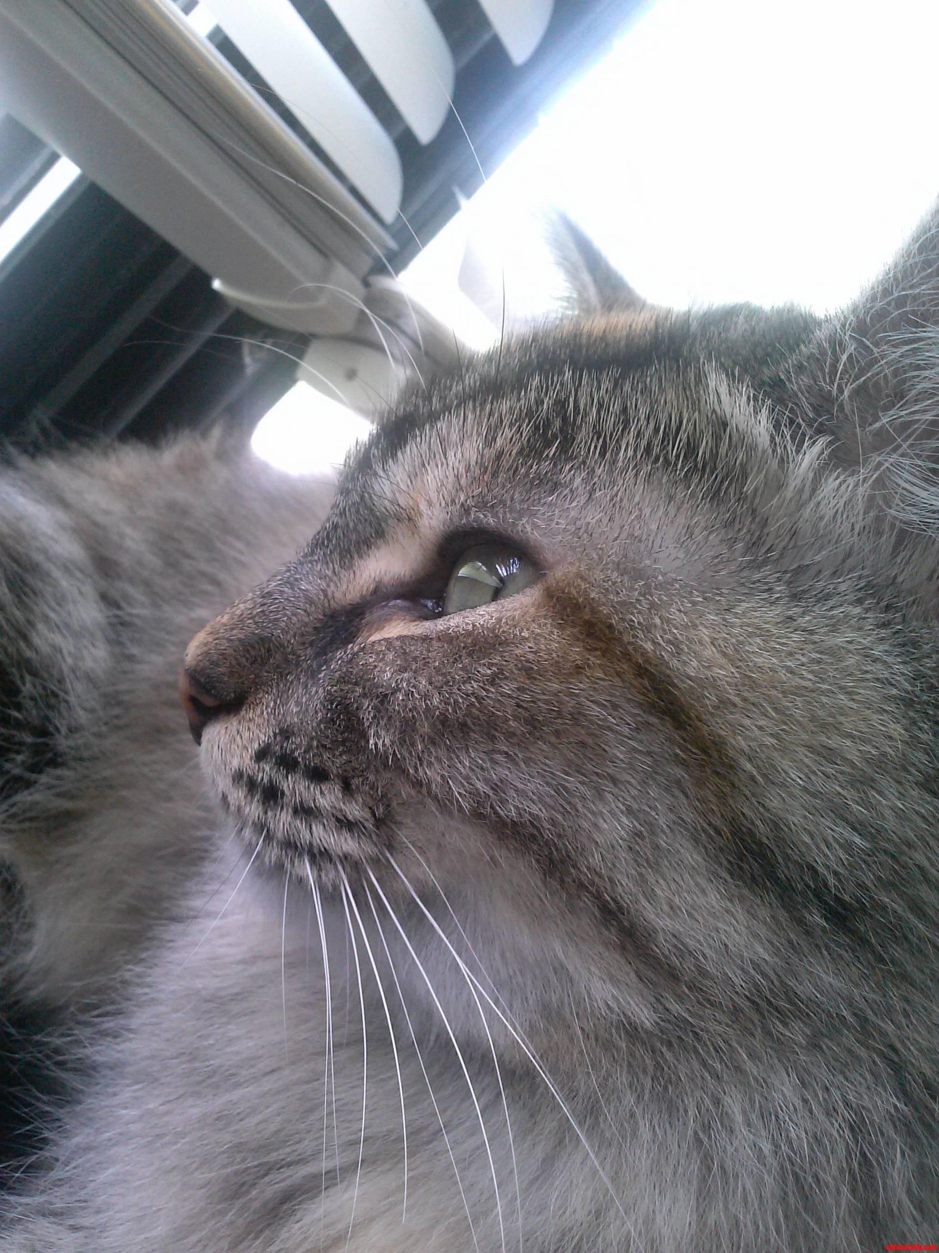 My cat Elvis
