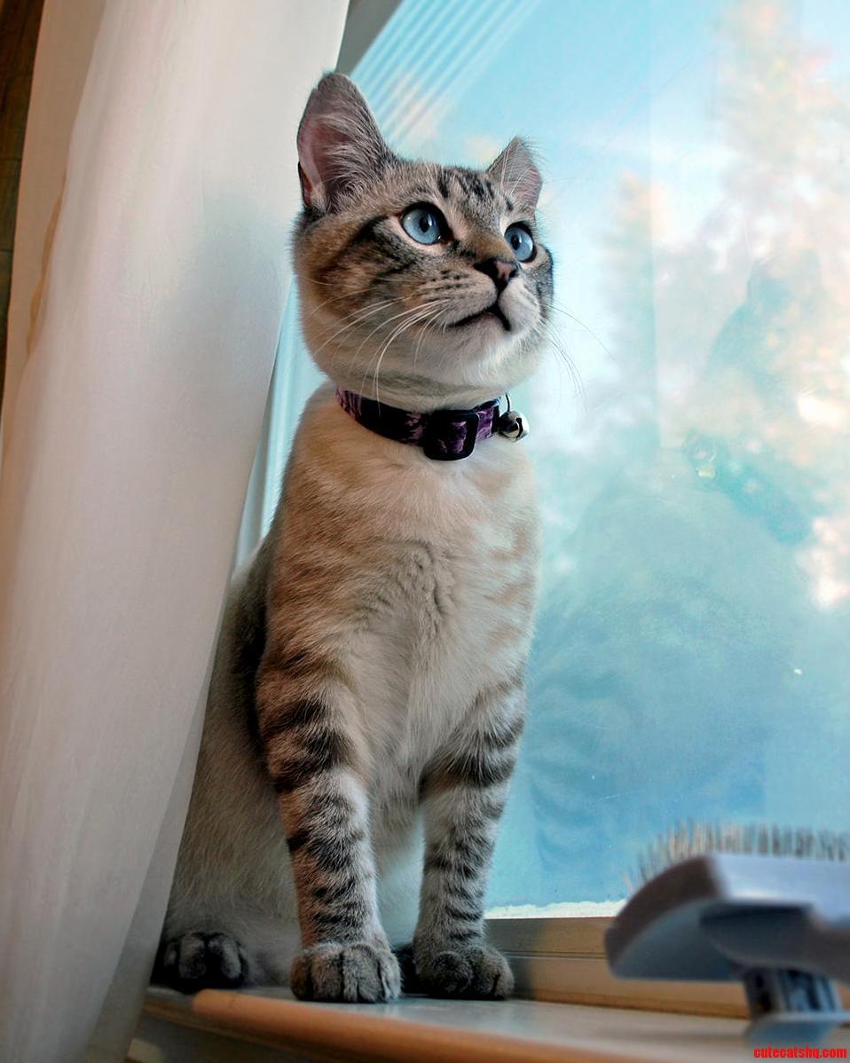 My cat Tavi looking majestic on a windowsill
