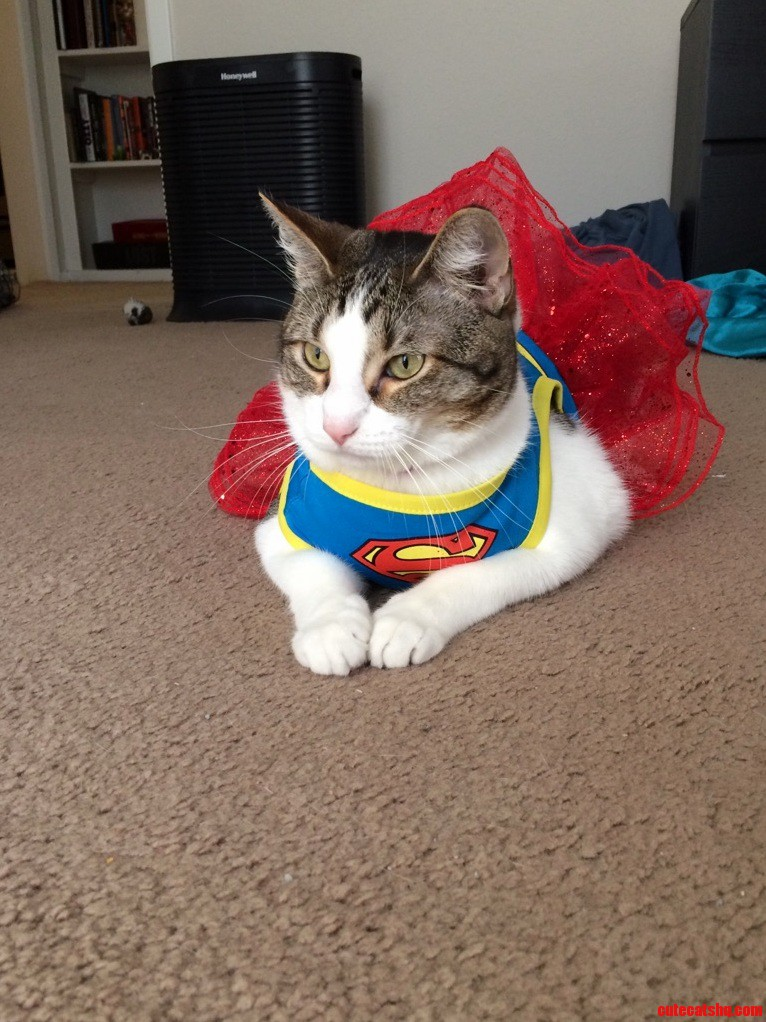 My cat as super girl
