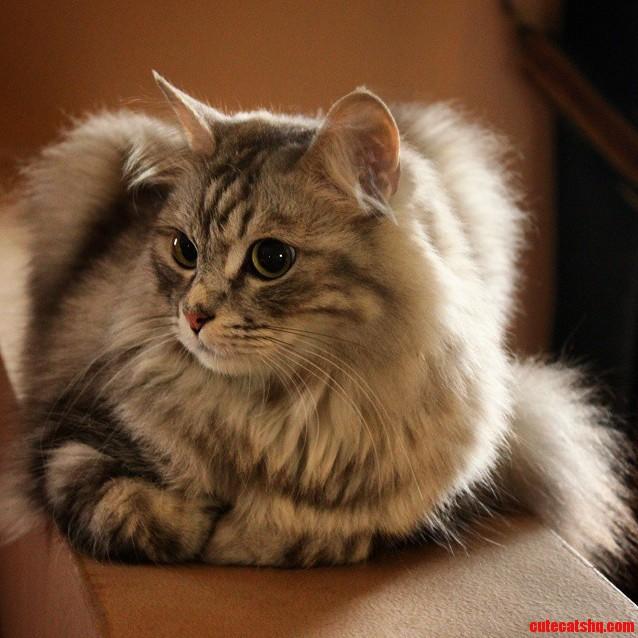 My cat leo