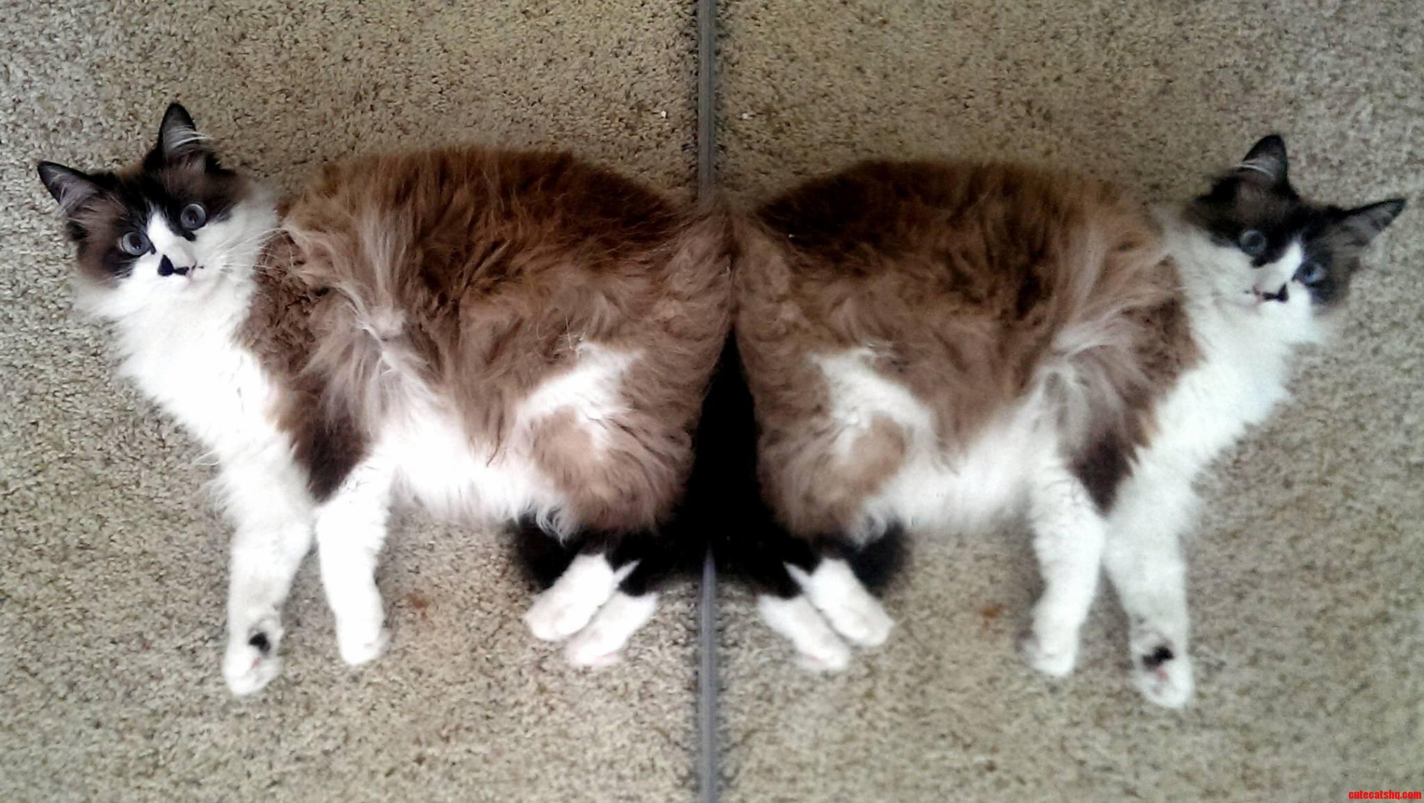 My cat missy yssim tac ym