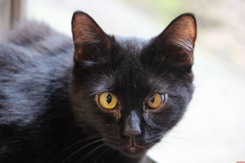 My cross-eyed kitty moch-moch