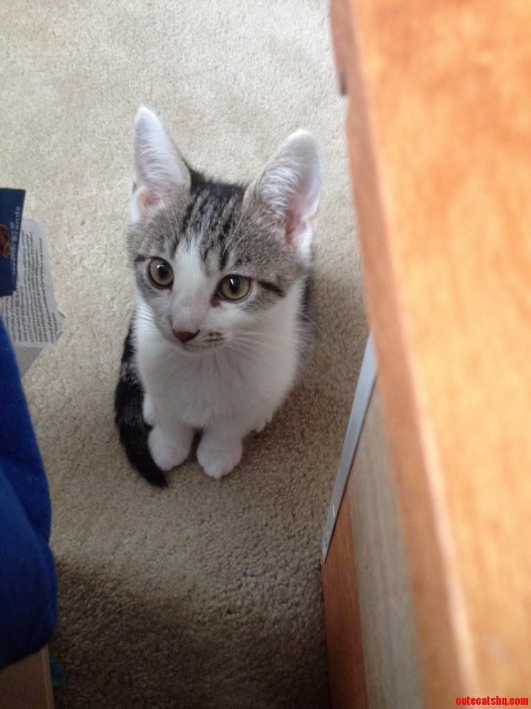 My cute little kitty