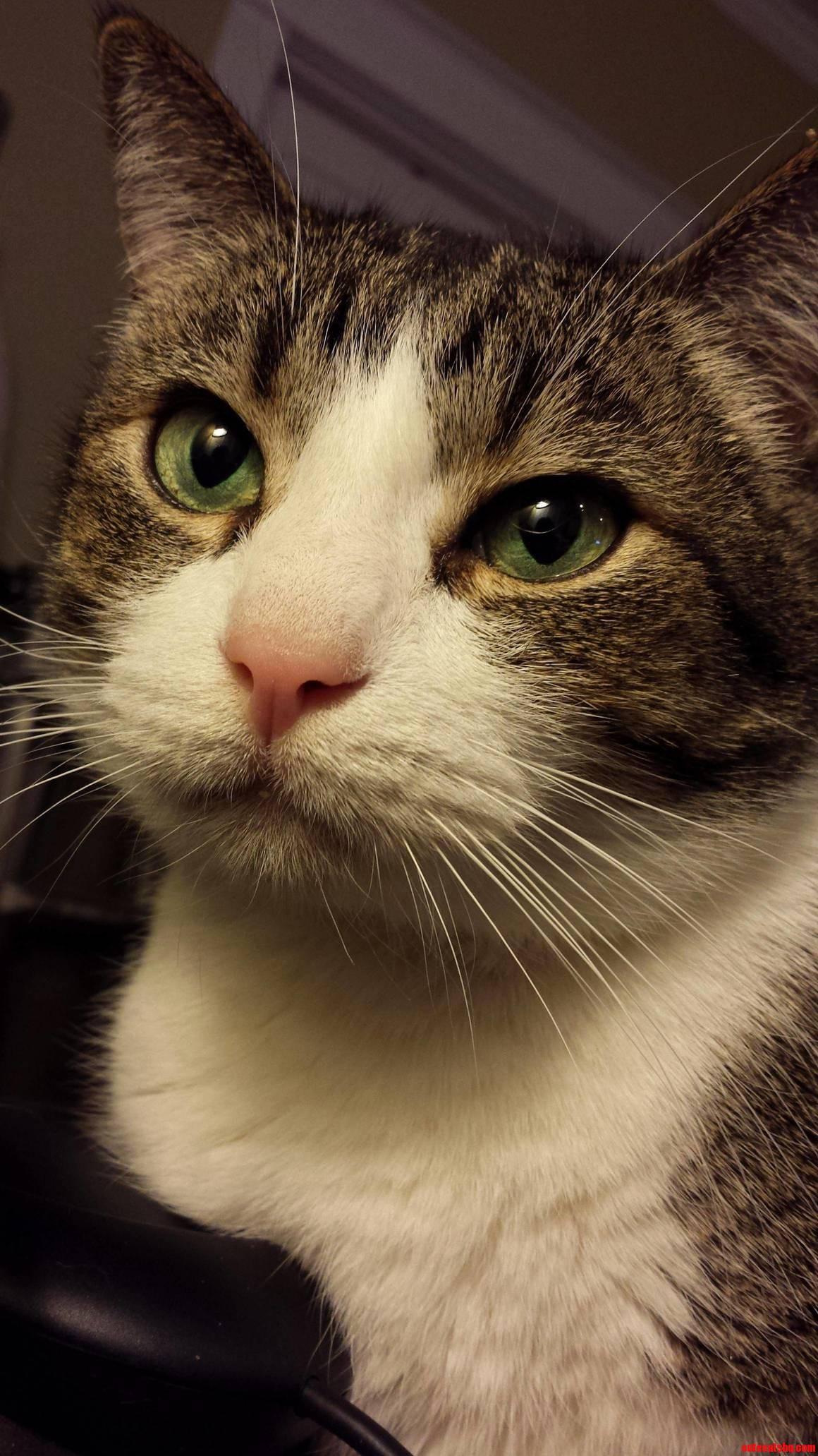 My sweet old man fat Murphy. prettiest eyes i ve ever seen.