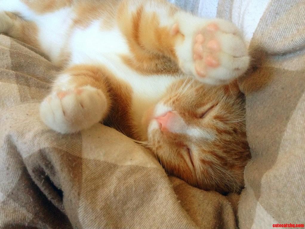 Pink paws pink nose