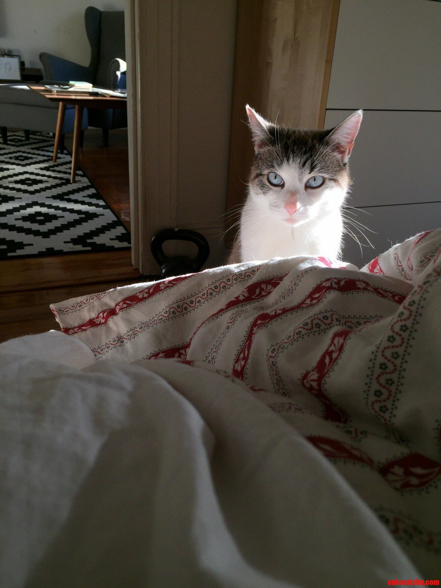 Stan had his hungry eyes on yesterday morning.