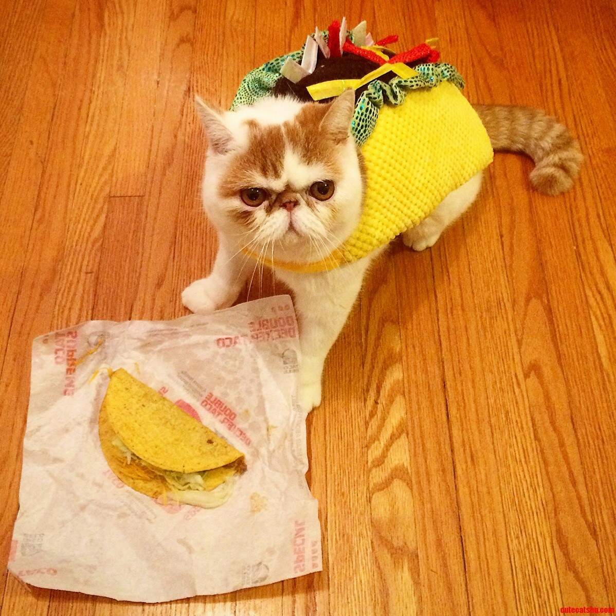 Cats Dressed Like Taco