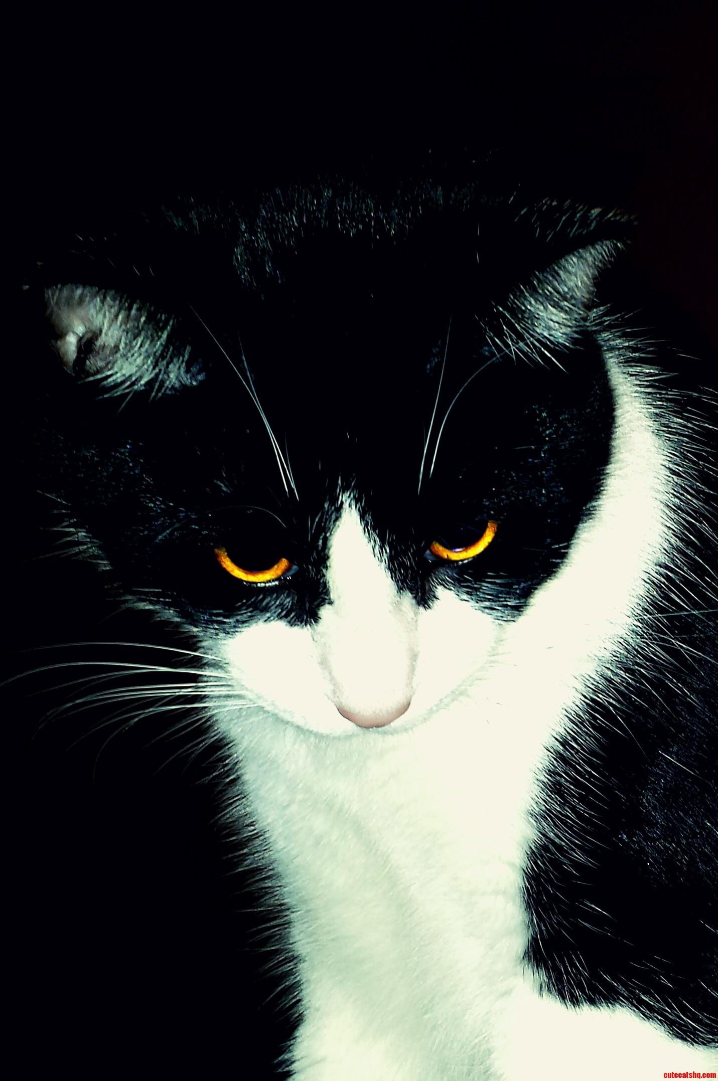 The eyes of a predator