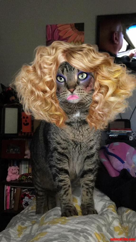 The perfect365 app works on cats too