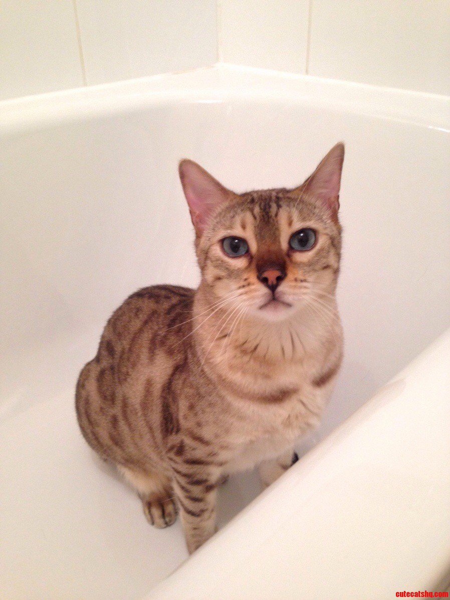 This is echo. he too likes to sit in bathtubs.