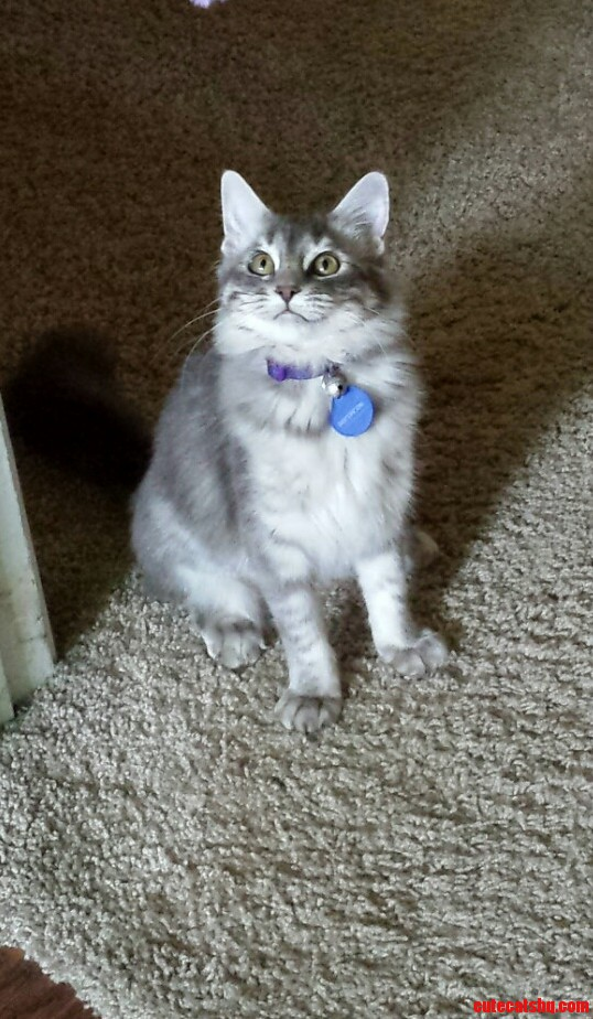 This is my pretty kitty. she likes to chew holes in my socks and steal my hair ties.