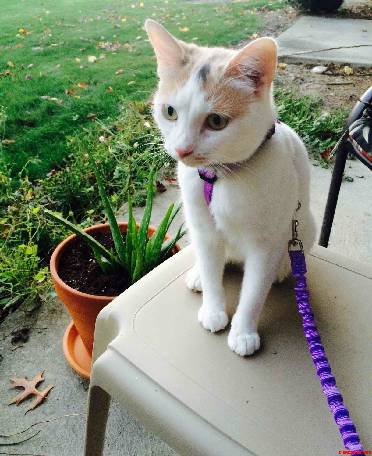 Took my kitty on her first walk today