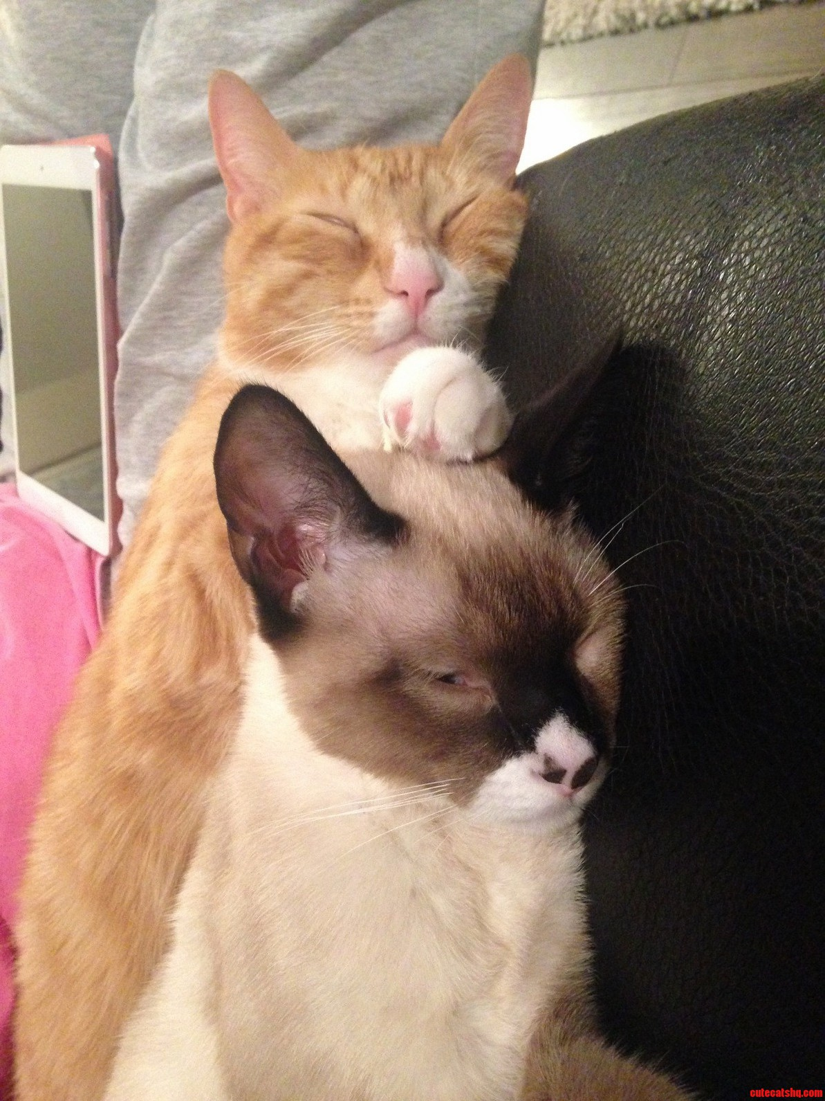 Two adoptive brothers getting along better than expected.