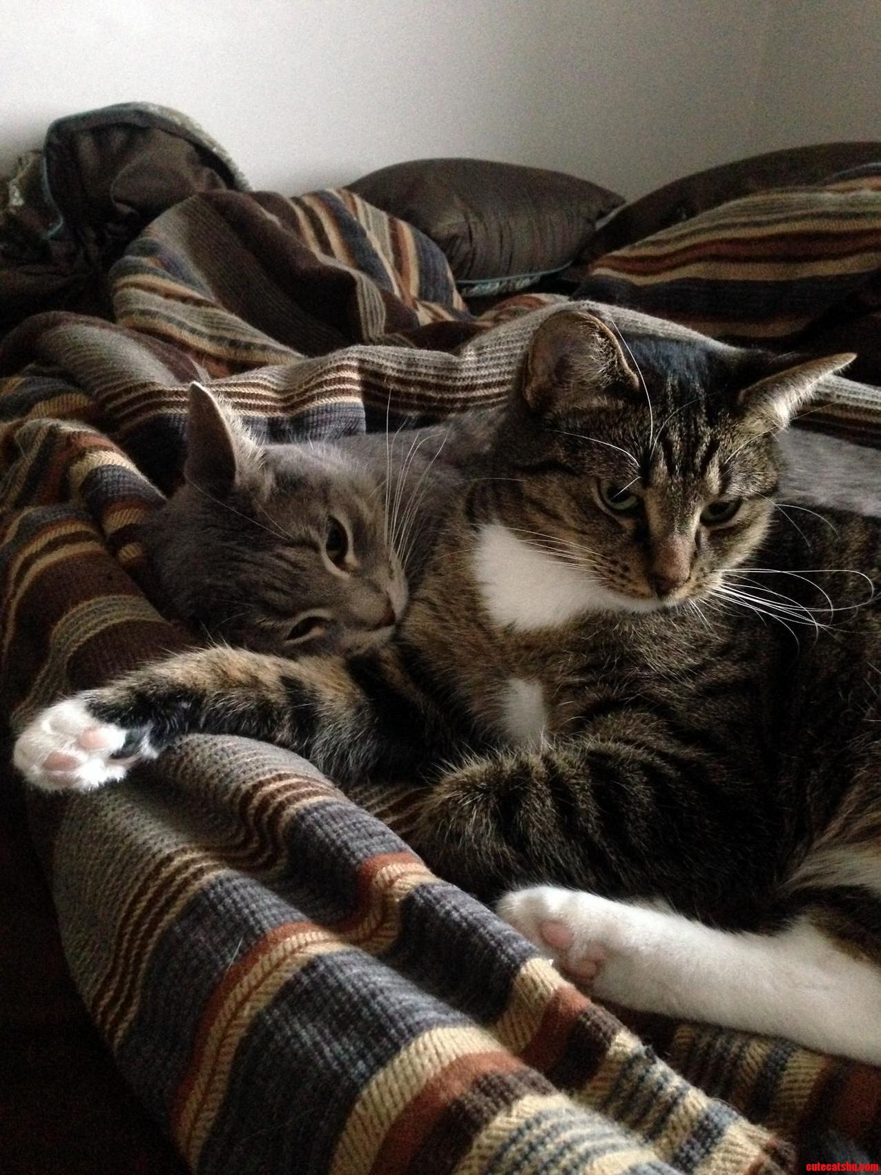 Two cuddlebuddies…