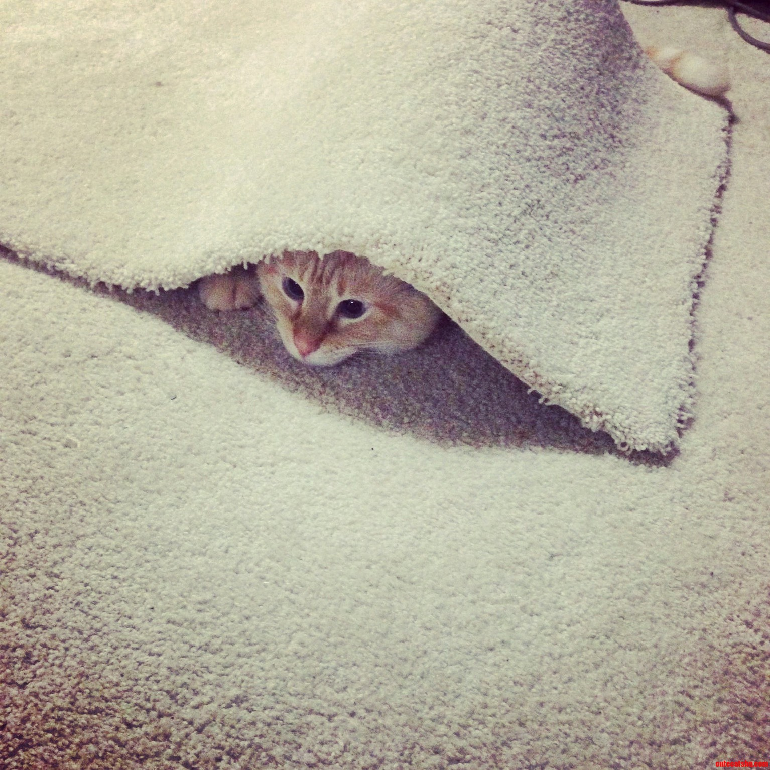 We think he was playing hide go seek alone…we think.