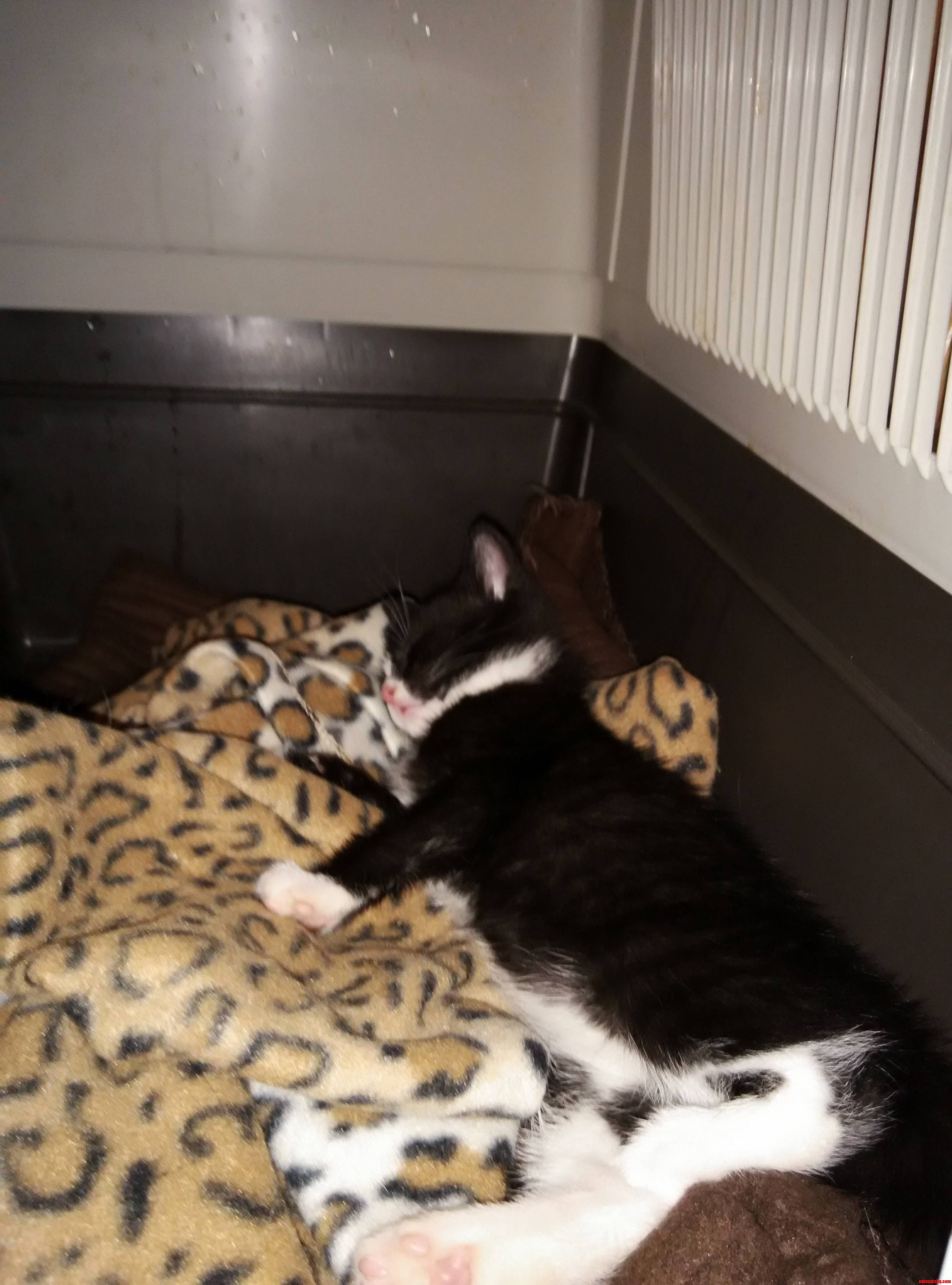 I have two indoor cats cute cats hq free pictures of for Having an indoor cat