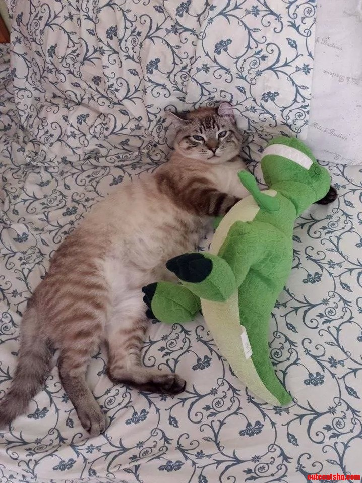 Caught my cat sleeping with this ferocious dinosaur